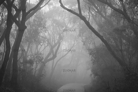 Misty road through Blue Mountains