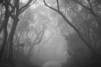 Misty road through Blue Mountains