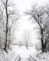 Trees and country road covered with snow in winter