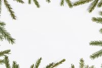 Fir tree branch frame on white