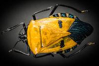 Elvis-Bug