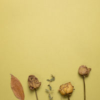 Brown dry rose flowers with leaves on khaki background. flat lay, top view, copy space