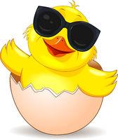Little joyful chick in sunglasses