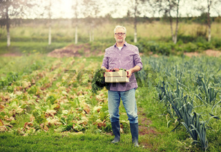 old man with box of vegetables at farm garden