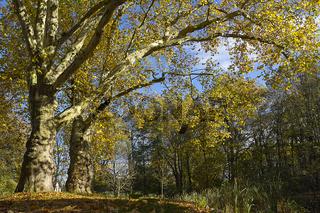 Diedersdorf - Alter Baumbestand im Herbst
