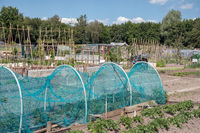Dutch allotment garden with protected vegetables, bean stakes and sheds