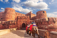 Agra Fort and elephants, view of India