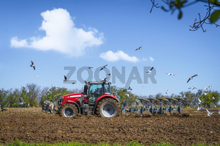 Seagulls flying over a rural field with a red tractor