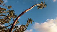 Low Angle Plants Over Blue Sky.jpg