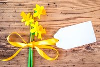 Yellow Narcissus Flower, Label With Copy Space