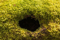 Green moss on a fallen tree with a hole