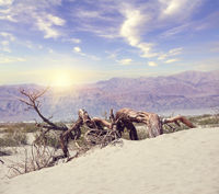 Dead wood in the Death Valley National Park, USA