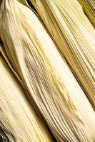 Detail of corn cobs.