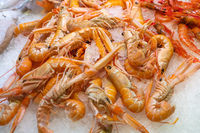 Fresh langoustines at a fish market