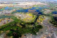Okavango Delta , Botwana, Afrika