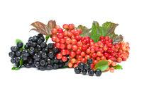 chokeberry and viburnum berries closeup on white background