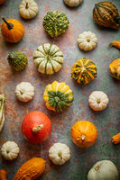 Various colorful mini pumpkins placed on rusty background