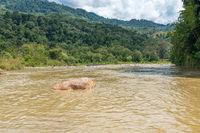 Der Alas fließt durch den Gunung Leuser Nationalpark und weiter in den Indischen Ozean