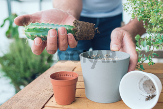 person repotting cactus at wooden table on porch