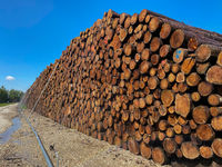 Bewässerte Baumstämme für Holzindustrie
