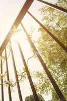 Sunshine beyond railing bars.