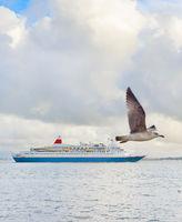 Cruise ship seagulls Lisbon, Portugal