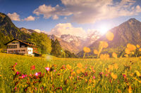 Flower meadow with snow covered mountains and traditional house in Sunset or Sunrise Backlit with lens flare. Bavaria, Alps, Allgau, Oberstdorf, Germany.
