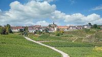 Cramant,Champagne region,Frankreich