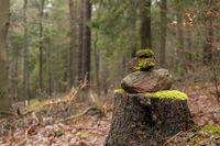 Turm aus 3 aufeinander gestapelten Sandsteinen auf dem Waldboden