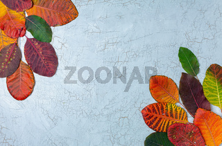 Frame composed of colorful autumn leaves.