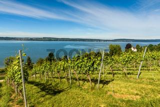 Blick über die Weinberge auf den Bodensee, Baden-Württemberg, Deutschland