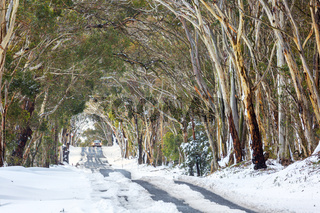 Snow drifts and snowgum tunnel