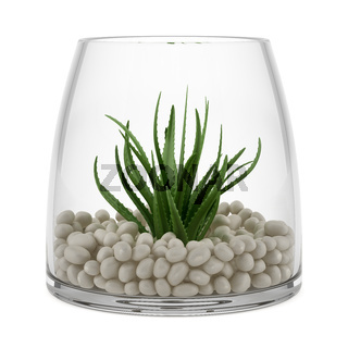 houseplant in glass vase isolated on white background