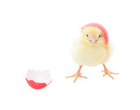 Easter Chick Pink