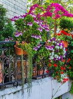 Many flowers adorn the balcony