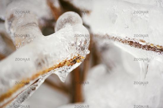 ice snake.jpg