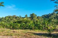 Bungalows auf dem Hügel mit Sicht auf den Gunung Leuser National Park auf Sumatra