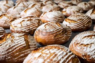 Making industrial bread