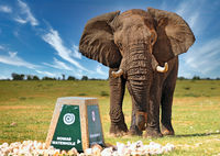 Elefant attackiert Wegweiser, Etosha, Namibia; african elephant attacks sign, Loxodonta africana