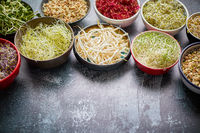 Various types of micro greens in colorful bowls on slate background. Fresh garden products
