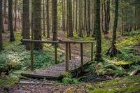 Holzbrücke über Bachlauf im goldenen Herbstlicht in Fichtenwald