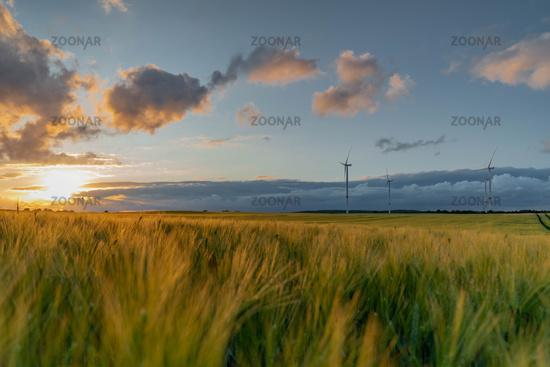 Luftansicht Wind Energy Park mit Kornfeld Landschaft, bei herrlichen Sonnenuntergang, Deutschland, E