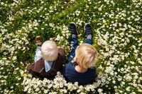 Two Blond Boys Sitting In Daisy Flower Meadow