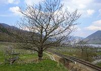 Landschaft mit aufgepropftem Obstbaum neben Eisenbahngeleisen im Donautal