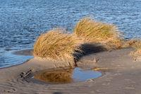 Dünen am Strand von Amrum