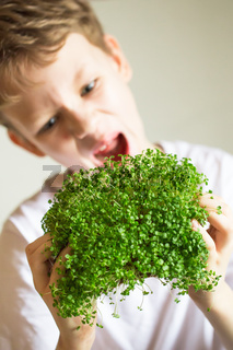 microgreen sprouts in kids hands Raw sprouts, microgreens, healthy eating concept. Sprouting Microgreens. Seed Germination at home. Vegan and healthy eating concept. Growing sprouts.