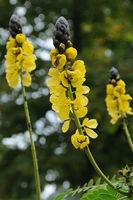 Blumenpracht am Bodensee