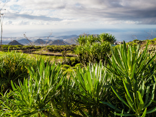Flora of Tenerife, Canary Islands. Spain