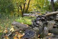 Brennholz, Firewood