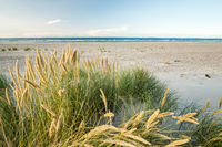 Beach with sand dunes and marram grass in soft sunrise sunset light. Skagen Nordstrand, Denmark. Skagerrak, Kattegat.